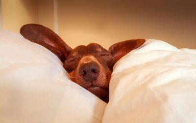 WELL BEING BENEFITS OF SLEEP